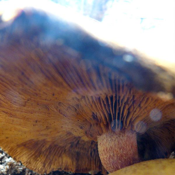 Otherworldly mushroom photo with sun & spray fairies