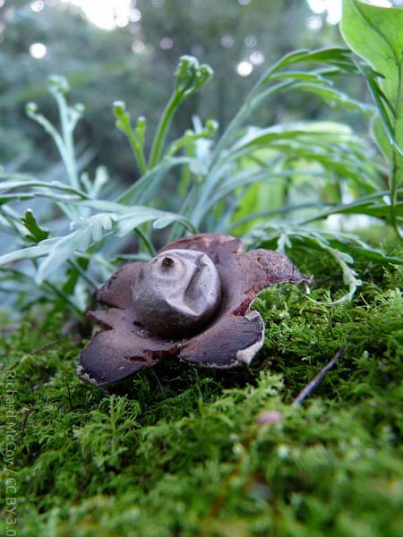 wpid740-MushroomPhoto-1.jpg