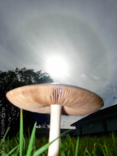 wpid742-MushroomPhoto-1.jpg