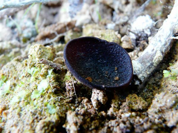 wpid748-MushroomPhoto-1.jpg