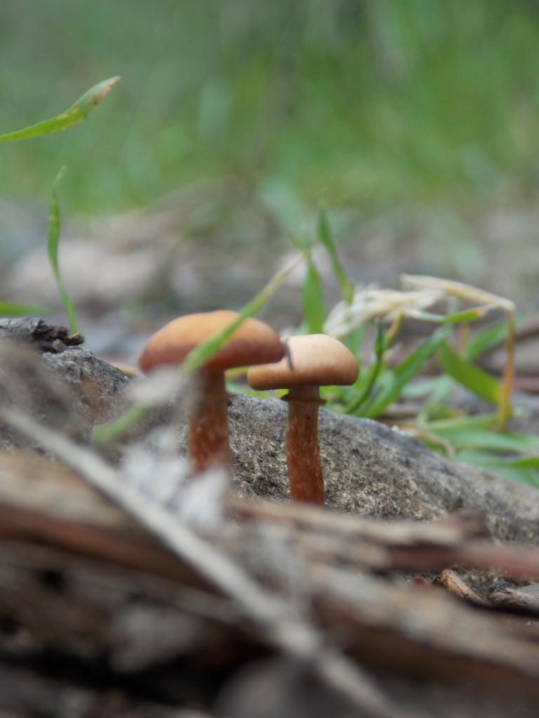 Ferntree gully fungi
